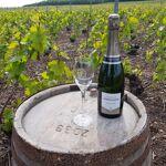 Champagne Deneufchatel Millésime 1 X 75 Cl Ce champagne Millésimé possède... par LeGuide.com Publicité