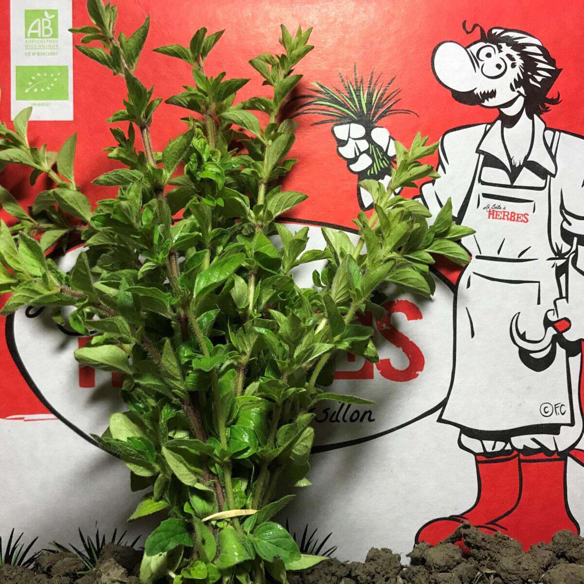 La Boite à Herbes Marjolaine Bio - 50g