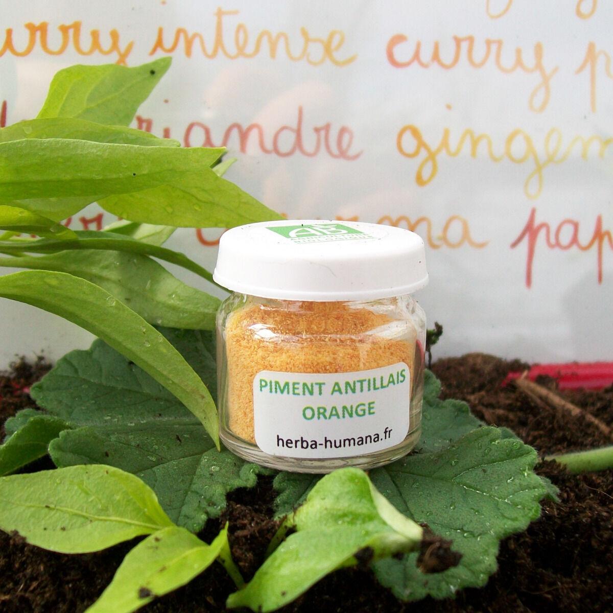 HERBA HUMANA Piment Antillais Orange Bio Cultivé en France 3 g