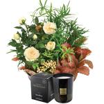 interflora  Interflora Bouquet Coin de paradis et sa bougie parfumée Esteban... par LeGuide.com Publicité