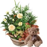 interflora  Interflora Bouquet Coin de paradis et son ourson Harry Coin... par LeGuide.com Publicité