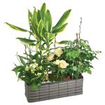 interflora  Interflora Bouquet Jardin d'eden Splendide composition,... par LeGuide.com Publicité