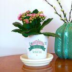 interflora  Interflora Bouquet Pot de fleurs personnalisable - Maman fleurie... par LeGuide.com Publicité