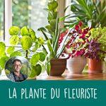 interflora  Interflora Bouquet Plante fleurie du fleuriste Plante du fleuriste... par LeGuide.com Publicité