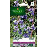 vilmorin  VILMORIN Pois de senteur Galaxie bleu (Lot de 3) Végétation dense... par LeGuide.com Publicité