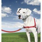 EASYWALK EASY WALK Harnais M - Rouge - Pour chien Harnais M - Une partie... par LeGuide.com Publicité