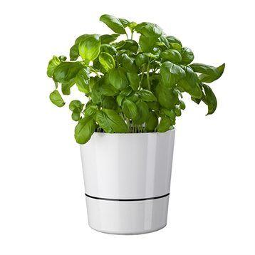 Pot hydro pour herbes aromatiques blanc Mepal
