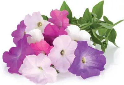 Click And Grow Recharge CLICK AND GROW Petunia lot de 3
