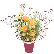 Interflora Mielrose