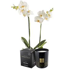 Interflora Candide et sa bougie parfumée Esteban