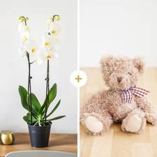 Interflora Candide et son ourson Harry