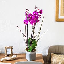 Interflora Purple