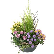 Interflora Bosquet