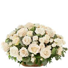 Interflora Rosae blanc