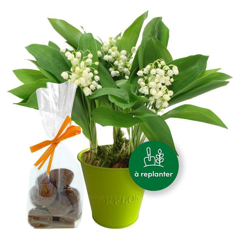 Interflora Muguet des bois et son sachet d'escargots en chocolat - Livraison Interflora