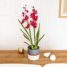 Interflora Cambria Nelly isler + cache pot