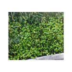 Pegane Brise-vue treillis en feuilles de rosier coloris vert tendre -... par LeGuide.com Publicité
