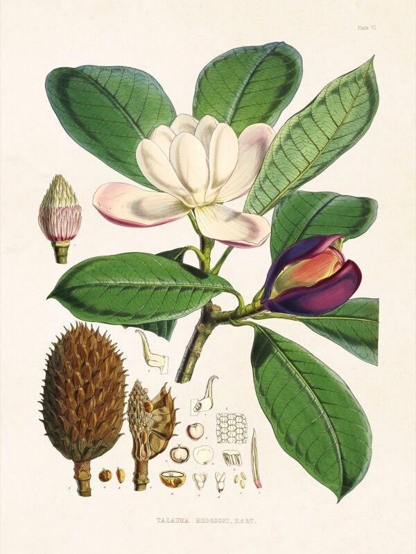 Dille&Kamille Carte, magnolia