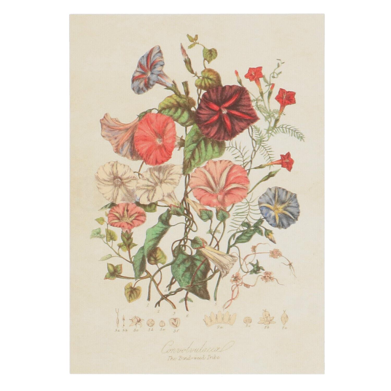 Dille&Kamille Carte, ipomoea tricolor grimpant