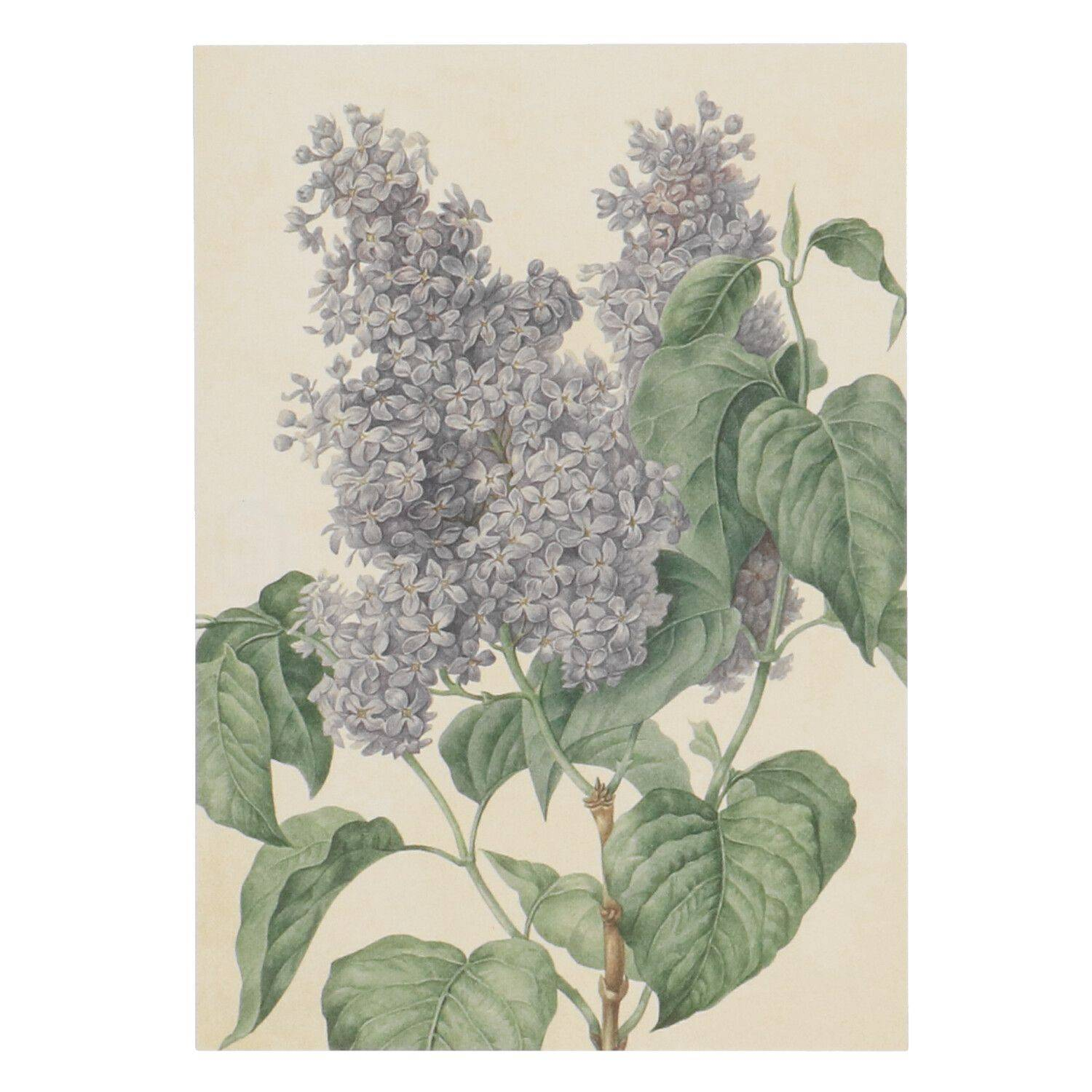 Dille&Kamille Carte, lilas