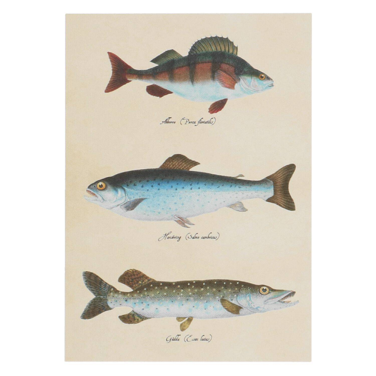 Dille&Kamille Carte, poissons