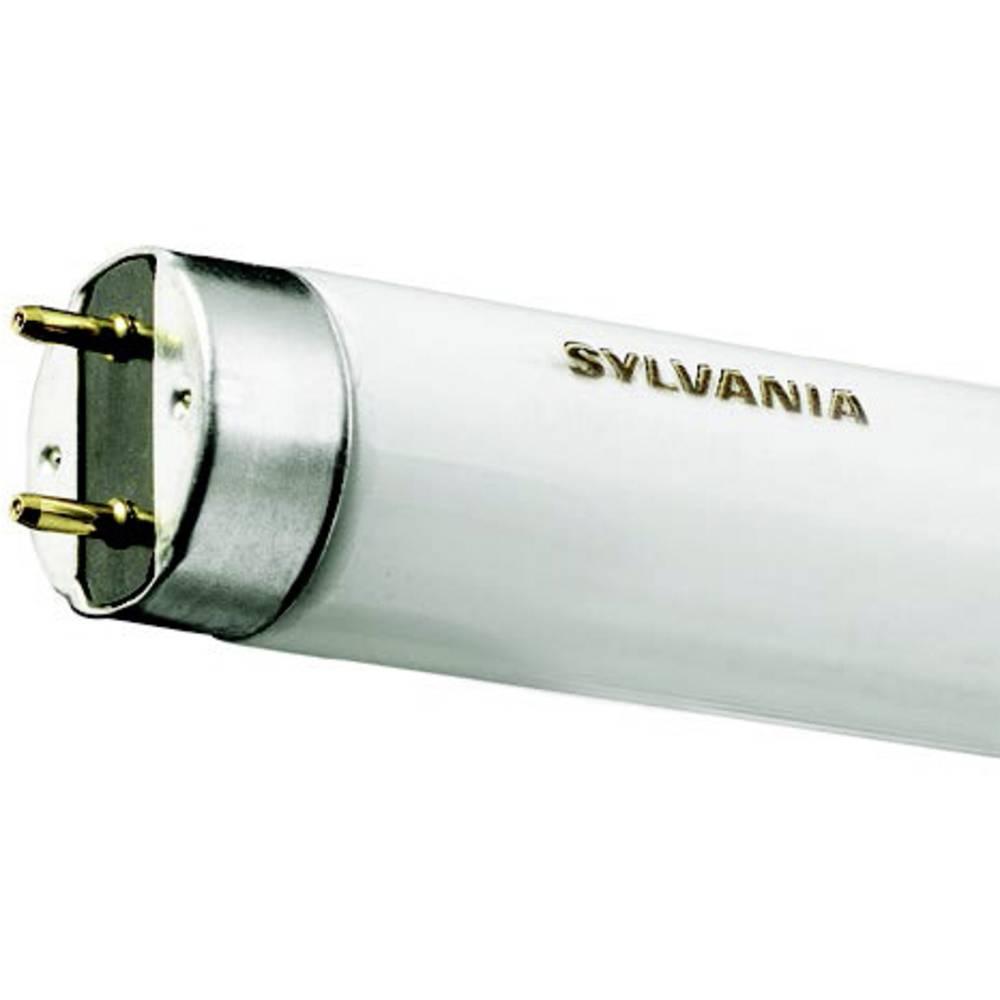 Sylvania Tube fluorescent G13 14 W forme de tube (Ø x L) 26 mm x 360 mm EEC: B (A++ - E) à intensité variable 1 pc(s)