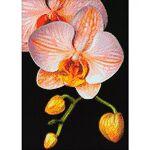 Kit broderie diamant  orchidée  Kit broderie diamant  orchidée ,contenu... par LeGuide.com Publicité