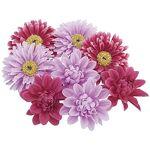 Têtes de fleurs, lilas/rose vif, 7 cm Ø, 8 pièces Têtes de fleurs, lilas/rose... par LeGuide.com Publicité