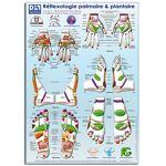 Poster Zones de réflexologie plantaire et palmaire A3 Ce poster de la... par LeGuide.com Publicité