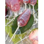 roses d antibes  Roses d'Antibes Sucettes à la Rose (par 6) Ces sucettes... par LeGuide.com Publicité