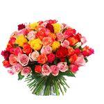roses d antibes  Roses d'Antibes Rose Multicolore Un feu d artifice... par LeGuide.com Publicité