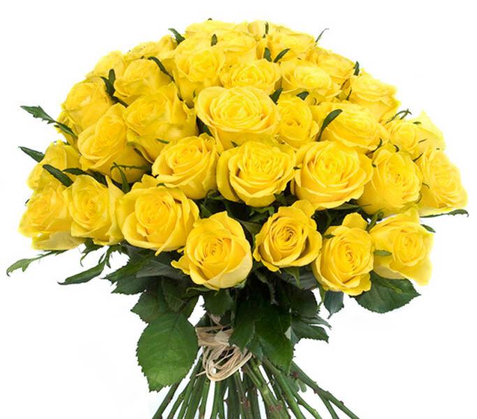 Roses d'Antibes SOLEIL RADIEUX Bouquet de 50 roses  jaunes