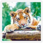 Journée découverte au Parc Zoologique d'Amnéville pour 5 personnes... par LeGuide.com Publicité