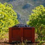 Atelier Initiation et Dégustation Vin Biologique en Domaine Viticole... par LeGuide.com Publicité