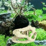 EMVANV 8.5x 5.5x 4.5cm Fish Tank Résine Tête de mort Dinosaure décoratifs,... par LeGuide.com Publicité