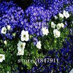 GEOPONICS fleuristes de couleurs mÃlangÃes de vente de SEEDS vente Hot... par LeGuide.com Publicité