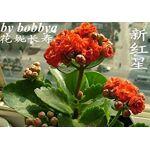 astonish  Astonish GRAINES D'ASTONIE: 18: Kalanchoe plantes en pot... par LeGuide.com Publicité