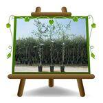 EURO PLANTS VIVAI Olivier arbre olives Pendolino Plante fruitière arbre... par LeGuide.com Publicité