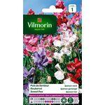 vilmorin  Vilmorin 5601241 Pois de senteur, Multicolore, 90 x 2 x 160 cm... par LeGuide.com Publicité