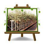EURO PLANTS VIVAI Olivier arbre olives Pendolino Plante fruitière sur... par LeGuide.com Publicité