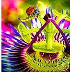 astonish  Astonish GRAINES D'ASTONIE: Time-Limit !! 10 graines Passion... par LeGuide.com Publicité