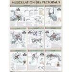 Frédéric Delavier Musculation des pectoraux : Poster Fournitures diverses,... par LeGuide.com Publicité