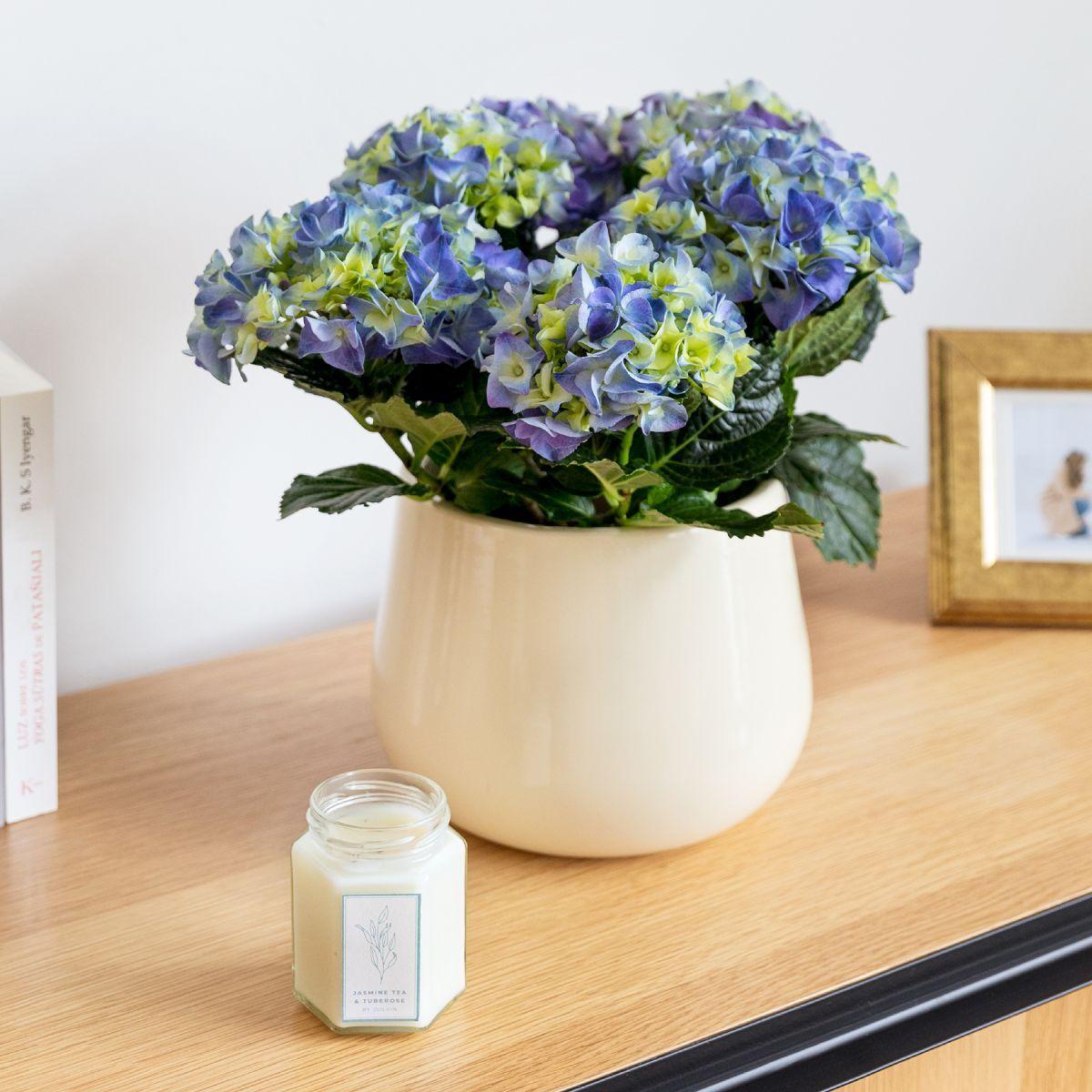 the colvin co pack matilda - ortensia blu, vaso e candela - piante a domicilio - festa della mamma - colvin