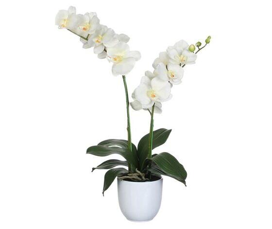 orchidea 2 rami