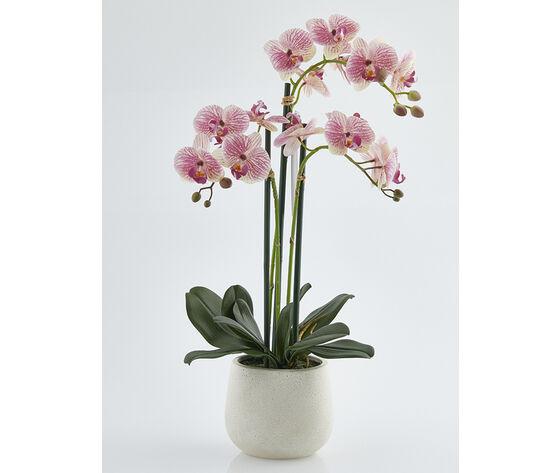 orchidea 3 rami