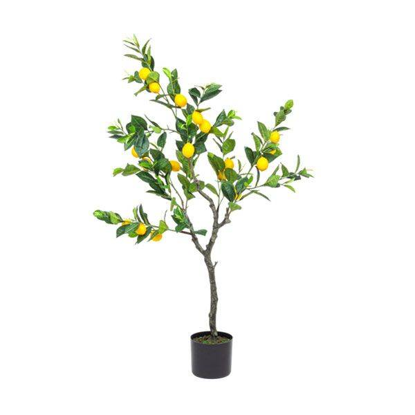 bizzotto pianta limone c-vaso 198 foglie h120 0172616