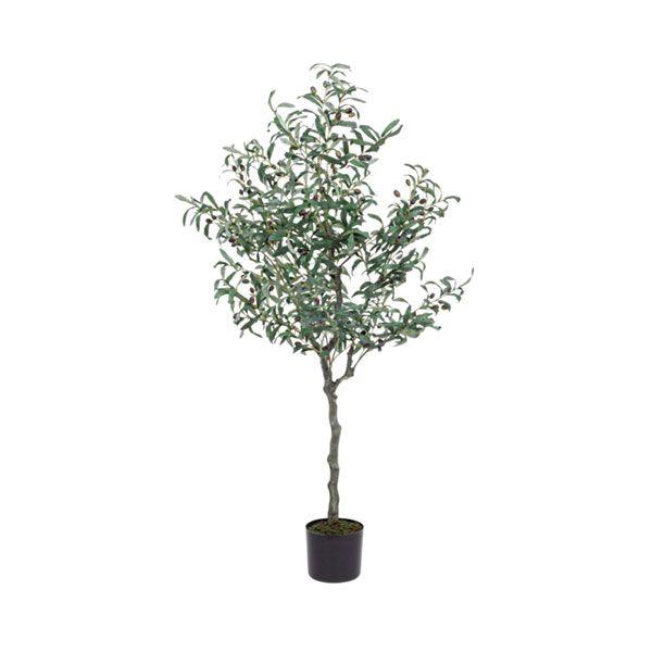 bizzotto pianta ulivo c-vaso 984 foglie h156 0172614