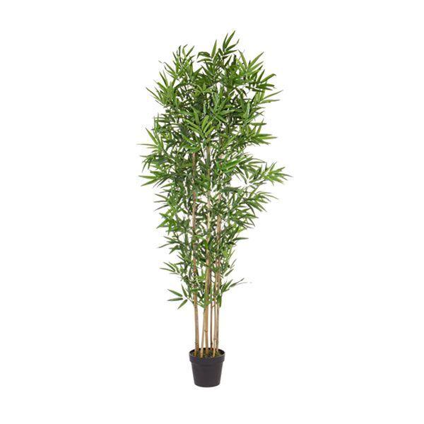 bizzotto pianta bambù c-vaso h185 0172386