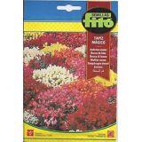Semillas Fito Semillas Fitó Dwarf antirrhine magic tapestry (Garden...