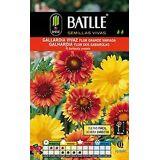 Batlle Gaillardia (Garden , Gardening , Seeds)